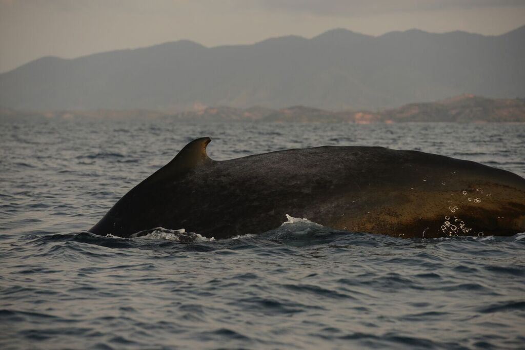 Whale sighted swimming in the Indian Ocean along the Eastern African Coast
